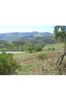 LAND AMOROSO CONTRADA FEOTTO - PROPERTY IN SICILY
