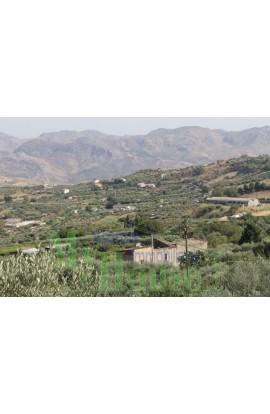 PANORAMIC HOUSE AND LAND BARBARO CDA FELICIA