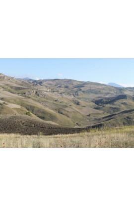 LAND SANZERI CONTRADA MILLAGA - PROPERTY IN SICILY