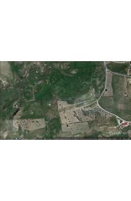 TERRENO CICCHIRILLO – CONTRADA ALBANO/TAMBURELLO