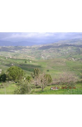 TERRENO PACE CONTRADA PETRARO - PROPERTY IN SICILY