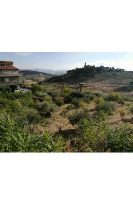 TERRENO COSTA – Contrada Catrini - Alessandria della Rocca