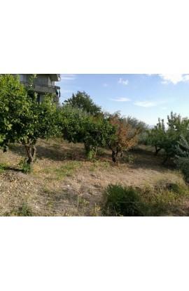 LAND COSTA - Contrada Catrini, Alessandria della Rocca- Property in Sicily