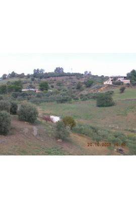 LAND CILONA CONTRADA SCIBBOLONE - PROPERY IN SICILY