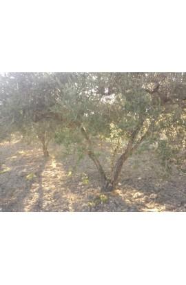LAND SCAGLIONE IN ALESSANDRIA - PROPERTY IN SICILY