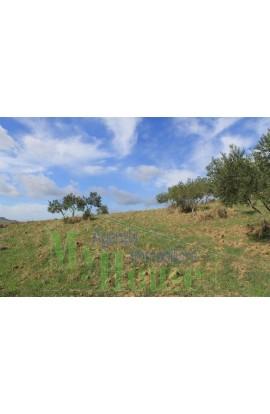 LAND PULIZZI CONTRADA NANNU - PROPERTY IN SICILY