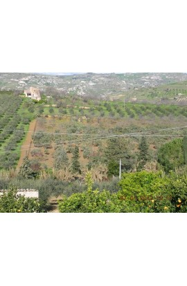 LAND GENTILE CDA VITELLACCI - PROPERTY IN SICILY