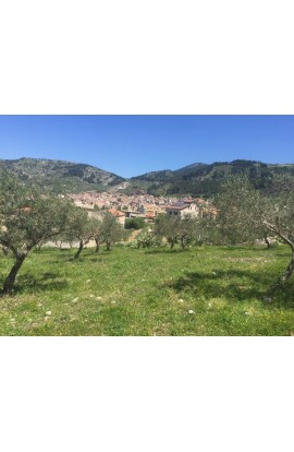 LAND PIZZUTO – SANTO STEFANO QUISQUINA - LAND IN SICILY